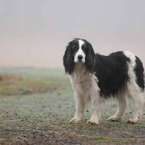 Dog HR.jpg