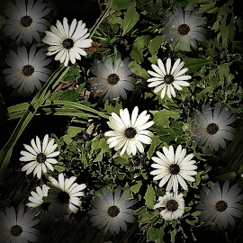 Flowers by Mary Gallo - Digital Art Abstract ( digital photography, flowers, abstract art, abstract, digital art,  )