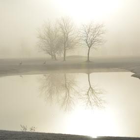 Fog at first light by Thomas Fitzrandolph - Landscapes Sunsets & Sunrises ( water, nature, fog, niagara county ny, trees, nikon d5200, sunrise, lockport ny,  )