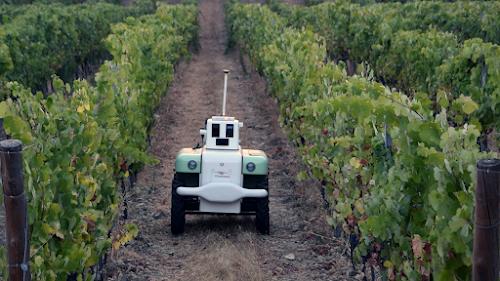 El nuevo robot VineScout moviéndose entre la vides.