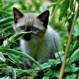 inspecting nature by Orpa Wessels - Animals - Cats Kittens (  )