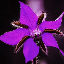 Purple Starfish Flower by Dave Walters - Digital Art Things ( macro, nature, colors, artsey, flower,  )