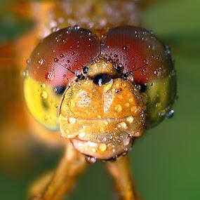 Wa wa wet by Alit  Apriyana - Animals Insects & Spiders