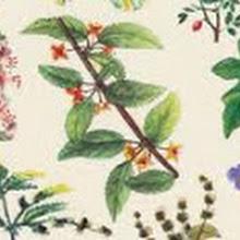 Secret Garden Club herbs & microleaves