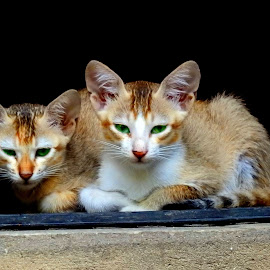 Cute  by Asif Bora - Animals - Cats Kittens (  )