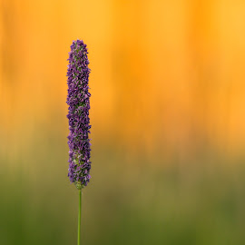 Ready to Flower by Chad Roberts - Nature Up Close Leaves & Grasses ( grassy, grass, seed, pollinate, leaves, flower )
