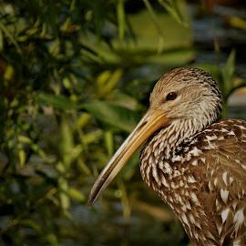by Denise O'Hern - Animals Birds
