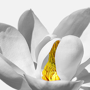 Magnolia Whiteout4.jpg