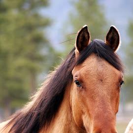 Sweet boy by Giselle Pierce - Animals Horses ( horse head, horse, gelding )