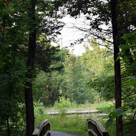 Over the River and Through the Woods by Deborah Lucia - Landscapes Forests ( trees, walkway, bridge )
