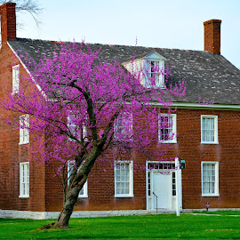 Shakertown by Larry Roberts - Buildings & Architecture Public & Historical ( dogwood, spring flowers, redbud, shakers, inns )