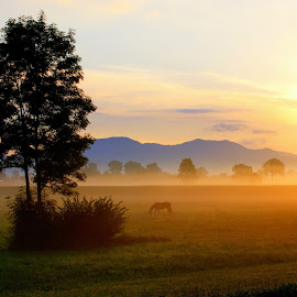 morning by Marko Lengar - Landscapes Sunsets & Sunrises ( hors, tree, morning, sun )