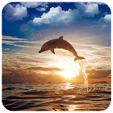 Adorable Dolphin Puzzles