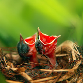 by Alit  Apriyana - Animals Birds