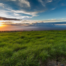 Maui Thompson road by Tim Guzman - Landscapes Mountains & Hills ( maui, sky, blue, grass, green, sunset, ocean,  )