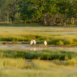 Green Marsh by Christian Murray - Landscapes Prairies, Meadows & Fields (  )