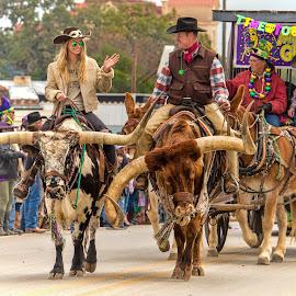 Cowboy Mardi Gras by Judy Rosanno - City,  Street & Park  Street Scenes ( parade, cowboy capital, longhorn cows, texas, mardi gras 2018, bandera )