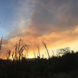 CarrFire by Sherry Gardner - Landscapes Forests ( #carrfire cal_fire # shastastrong #redding )