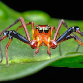 macro spider by ALex Tan - Novices Only Macro
