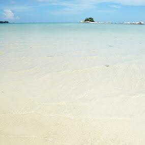 Starfish by Jenni Ertanto - Landscapes Beaches ( sand, nature, starfish, beach, landscape )