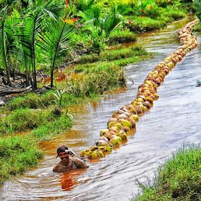 namanya sambit kelapa,walau tradisional tpi masuk diakal.. by Daenk Andi - People Street & Candids ( pekerja, sungai, buah, tradisional, potrait pria, lelaki, jalan, kendaraan, pedalaman )