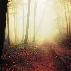 20170916-DSC_1768 by Zsolt Zsigmond - Landscapes Forests ( mystery, forest, leaf, landscape, morning, sunlight, light - natural phenomenon, magic, season, nature, tree, fog, autumn, outdoors, woodland, sunbeam, mist )