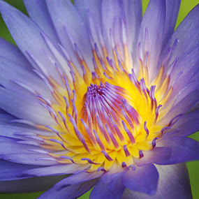 Glow of light by Arvind Akki - Nature Up Close Gardens & Produce ( flower, pwcflowergarden-dq,  )