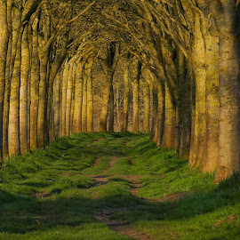 Sunny Trees by Geert Vanhaverbeke - Uncategorized All Uncategorized ( tree, sunset, green )