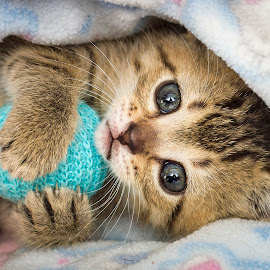 Mine by Eric Christensen - Animals - Cats Kittens ( kitten, ball, blue, play, tabby )