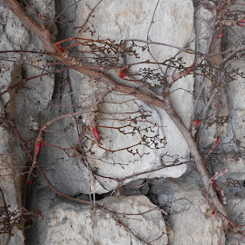 Spring awakening by Malenica B. - Nature Up Close Rock & Stone