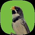 App Coleiro Fibra Campeão APK for Windows Phone