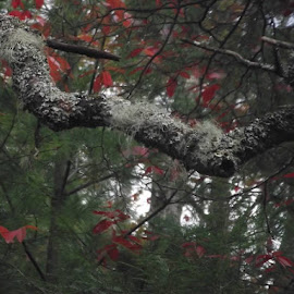 Lichen on a branch by Valerie Paree - Novices Only Flowers & Plants