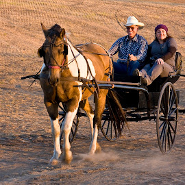 Cowboy giving a pretty girl a ride in antique buggy. by Gale Perry - Transportation Other ( golden background, girl getting a ride, cowboy, buggy, sunset, horse pulling, antique, black,  )
