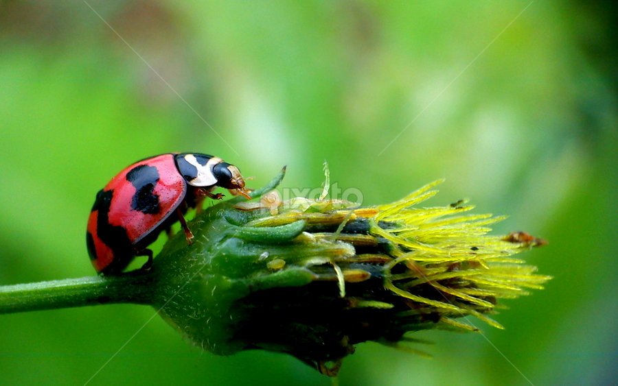 Mendaki by Adnan Hidayat Prihastomo - Instagram & Mobile Other ( macro, ladybug, insect )