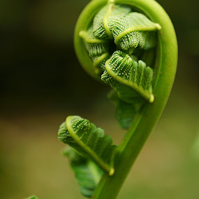 young fern by Mohamad Hafizuddin - Nature Up Close Other plants