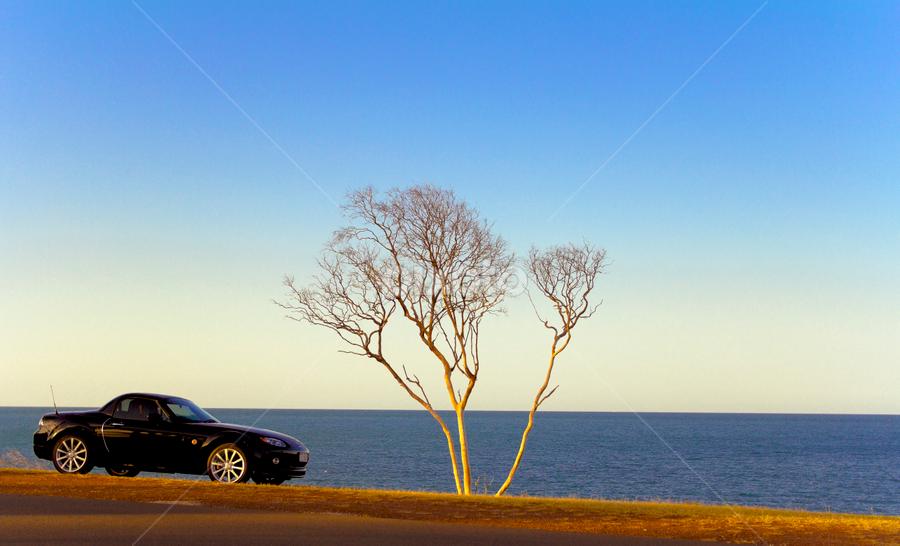 Mazda MX5 Roadster by Ellen Foulds - Transportation Automobiles ( car, mazda mx5, automobile, mazda roadster, transportation )