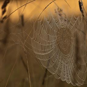 by Allan Wallberg - Nature Up Close Webs ( spindelnät, spindelväv,  )