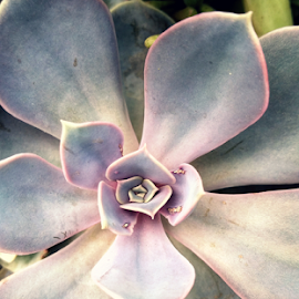 how succulent by Todd Reynolds - Nature Up Close Rock & Stone