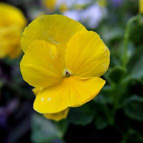 by Dexyogi Shang Serigalahitam - Nature Up Close Flowers - 2011-2013