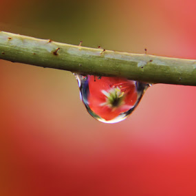 by Prerna Pathre - Abstract Water Drops & Splashes