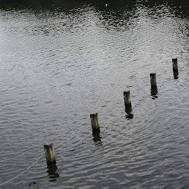 Hyde Park London by Irene Llobell Llobell - Landscapes Weather ( water, london, landscape )