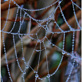 Water drops on spider web by Doreen L - Nature Up Close Natural Waterdrops ( water drops, spider web,  )