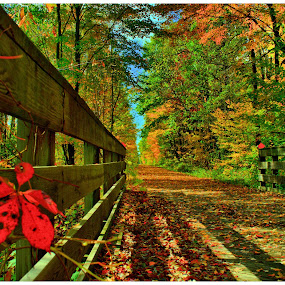 I Think I Found My Happy Place by Michael Priest - Landscapes Forests ( wisconsin, fall, bridge )