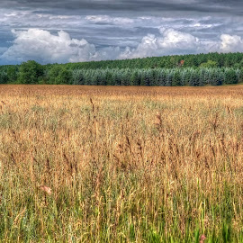 cloudy prairie by Fraya Replinger - Landscapes Prairies, Meadows & Fields ( clouds, summer, trees, cloudy, prairie )