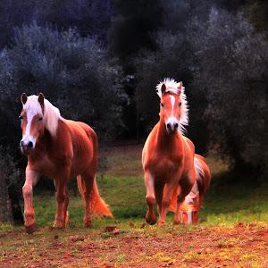 konie3.jpg