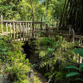 Wood Walking Bridge - Jamaica by Dee Haun - Buildings & Architecture Bridges & Suspended Structures ( 2017, jamaica, walking, stakes, wood, bridges, r0301xrce2, buildings & architecture )