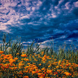 THE HILLS ARE ALIVE  by Michael Rey - Flowers Flowers in the Wild ( clouds, hillside, wildflowers, cluster, summer, natural beauty )