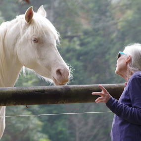 Telling your friend why you have been away by Carolyn Lawson - Animals Horses