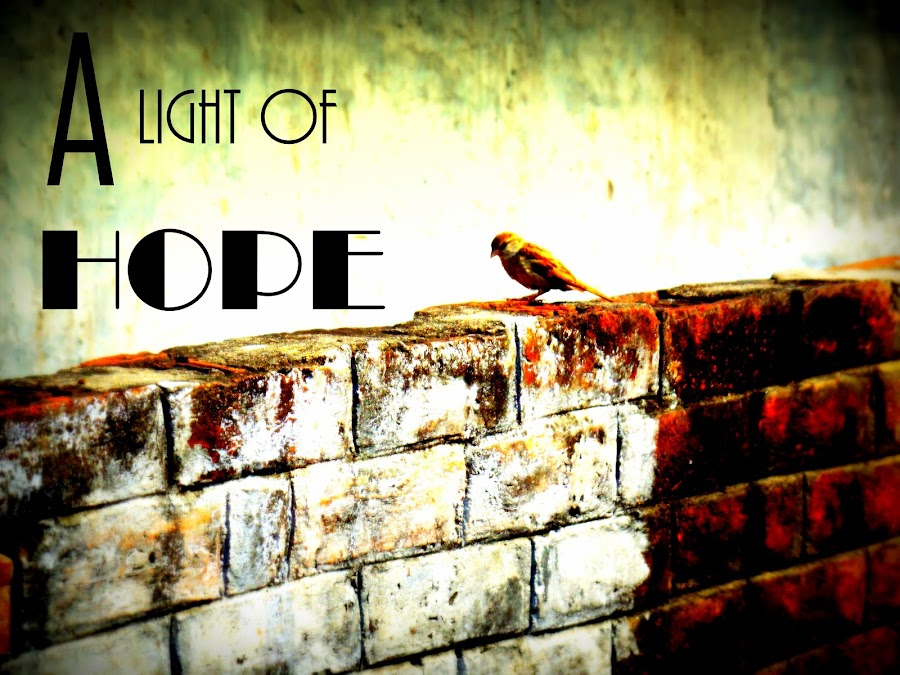 by Rohit Madhvan - Typography Captioned Photos ( bird, light of hope, sunshine, wall, sparrow )