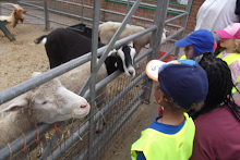 City Farm Trip 2015